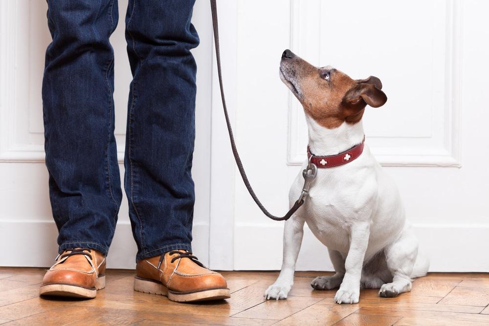 clinical dog walker