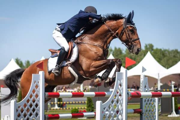 What can hypnotherapy help with horse riding show jumping sport