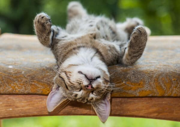 a cat, laying on a bench upside down, having a cat nap